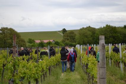 Betriebsausflug mit Weinwanderung und Weinprobe