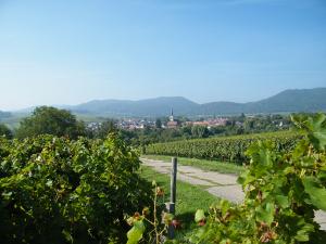 Weinwanderung Termine