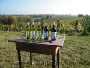 Weinprobe beim Winzer in der Pfalz