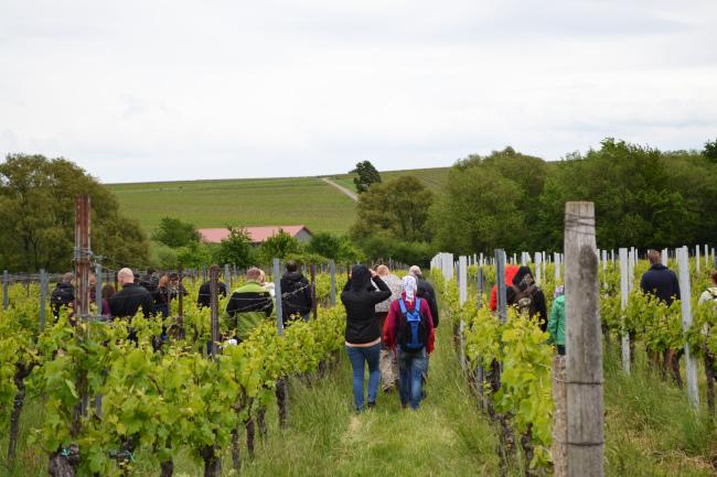 Singelwanderung in der Pfalz